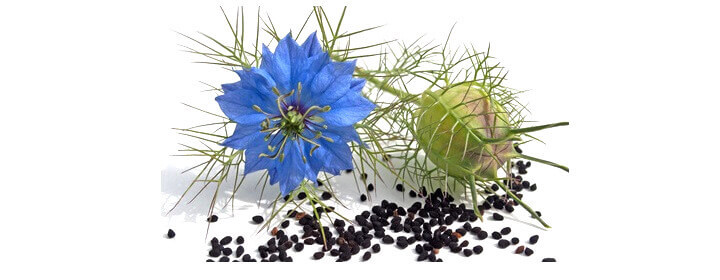 The Black Seed benefits